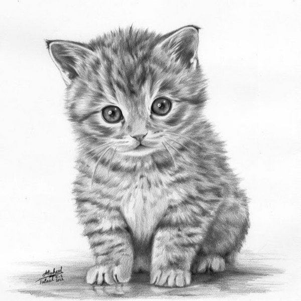 Easy Pencil Drawings of Animals That Look So Realistic