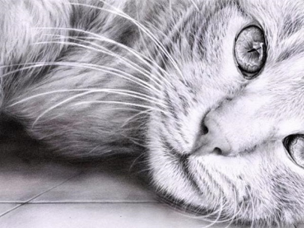 50 Easy Pencil Drawings Of Animals That Look So Realistic